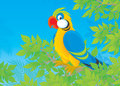 Parrot in jungle motley perched on a tree branch a tropical forest Stock Image