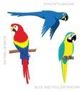 Parrot Macaw Cartoon