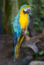 Parrot macaw in the green background Stock Photos