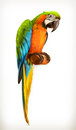 Parrot macaw illustration