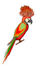 A parrot macaw isolated on a white background vector art illustration Royalty Free Stock Image