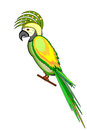 A parrot macaw isolated on a white background vector art illustration Royalty Free Stock Photo
