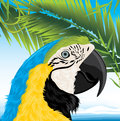 Parrot and palm branches Stock Photo