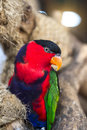 Parrot perched on a branch Royalty Free Stock Photo