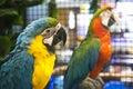Parrot In A Pet Shop.