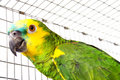 Parrot Portrait Royalty Free Stock Photos