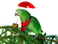 Parrot Santa 2 Stock Photography