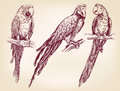 Parrot set isolated hand drawn vector llustration realistic sketch Stock Image