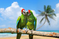 Parrot severe macaw on branch on tropical background the white sand beach white blue sky Stock Photos