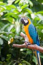 Parrot Standing on branches Stock Image