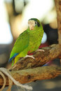 Parrot in tropical jungle Royalty Free Stock Photo