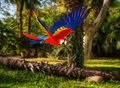 Parrot In Tropical Landscape