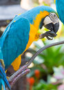 Parrot in tropical park of nong nooch in pattaya thailand Stock Photos