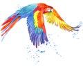 Parrot. Watercolor Parrot Illu...