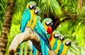 The parrots Stock Images