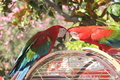 Parrots love beak nature summer Stock Photos