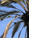 Parrots on palm tree green sitting a treee Royalty Free Stock Images