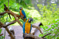 Parrots picture of standing on the tree Royalty Free Stock Image