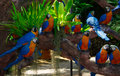 Parrots thailand fake on a tropical tree Royalty Free Stock Images
