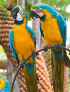 Parrots in tropical park of nong nooch in pattaya thailand two Stock Photography