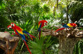 Parrots two enjoying sunshine in a national park reserve in mexico Royalty Free Stock Photography