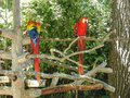 Parrots at zoo Royalty Free Stock Photo