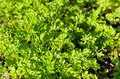 Parsley background from young green Stock Photos
