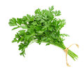 Parsley bunch Royalty Free Stock Photo