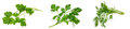 Parsley, cilantro, dill on a white Royalty Free Stock Photo
