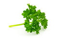 Parsley close up of cooking ingredient on white background Stock Image