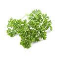 Parsley close up of fresh organic on white background shallow dof Royalty Free Stock Photography