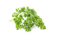 Parsley close up of fresh organic on white background shallow dof Royalty Free Stock Images