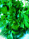 Parsley and dill Royalty Free Stock Photo