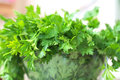 Parsley fresh green herb closeup on the table Royalty Free Stock Photo