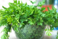 Parsley green herb fresh on the table Royalty Free Stock Photography