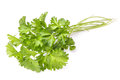 Parsley herb Royalty Free Stock Photo