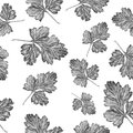 Parsley illustration on white background, Vintage vector seamless pattern, hand drawn plants texture decoration for
