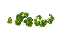 Parsley isolated on the white background Stock Photos