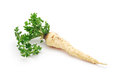 Parsley root on white background Royalty Free Stock Images