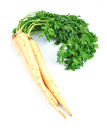Parsley root on white background Stock Image