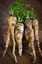 Parsley root on the wooden table Stock Image