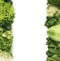 Parsley, spinach, cucumber, cauliflower, zucchini, arugula, cabbage, mint and lettuce.
