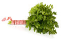 Parsley with a tape measure isolated on white background Royalty Free Stock Images