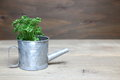 Parsley in a in a tin watering can Royalty Free Stock Photo