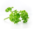 The parsley vegetable on white isolate background Stock Photo