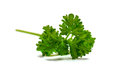 Parsley on white background Stock Images