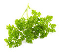 Parsley on a white background Royalty Free Stock Images