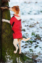 Parson Jack Russell climbing tree in winter Stock Image