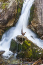 Part of mickiewicz waterfall on path to morskie oko in tatra mountain poland Stock Photos