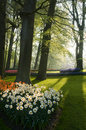 A part of the park keukenhof in backlight Stock Image
